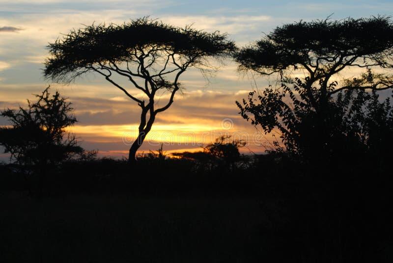 заход солнца serengeti стоковые изображения