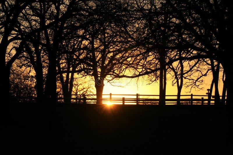 Заход солнца в деревьях стоковая фотография