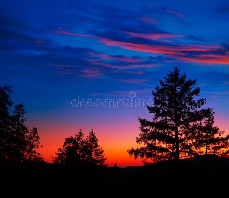 Заход солнца в национальном парке Yosemite с силуэтами дерева стоковые изображения