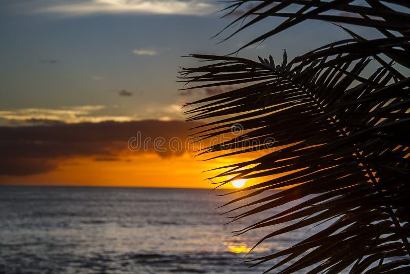Заход солнца в папоротниках стоковое изображение