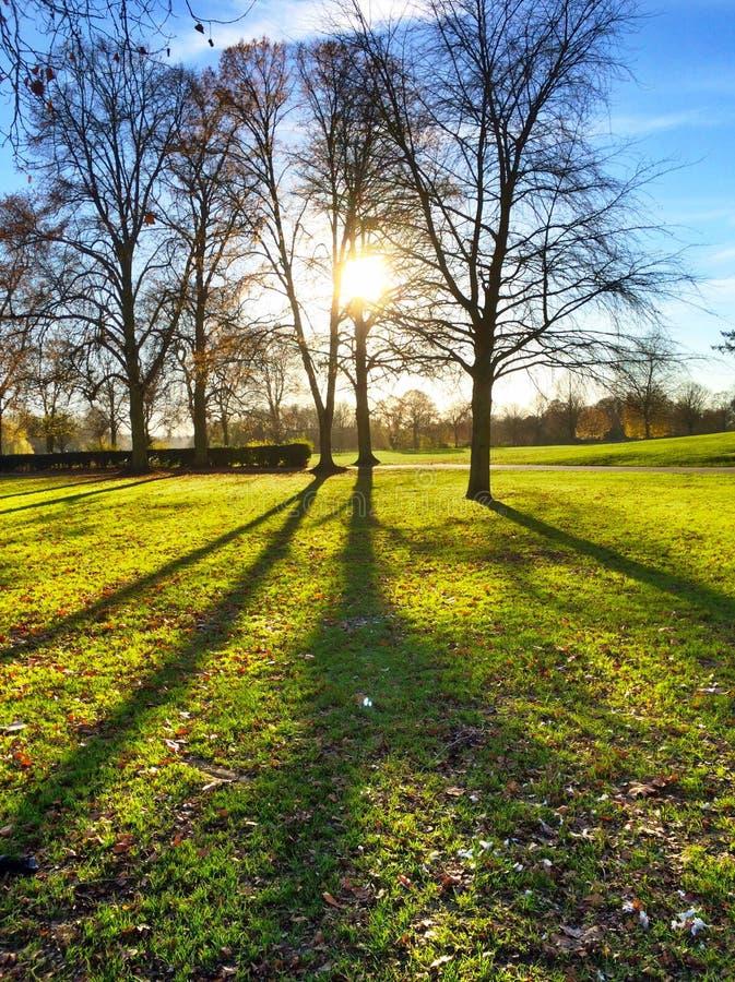 Заход солнца в парке стоковые изображения rf