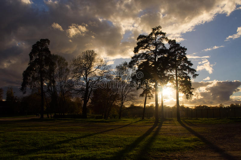 Заход солнца в парке стоковое изображение rf
