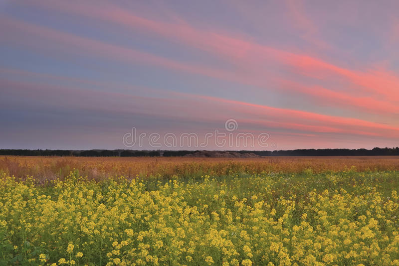 Заход солнца в поле осени стоковая фотография rf