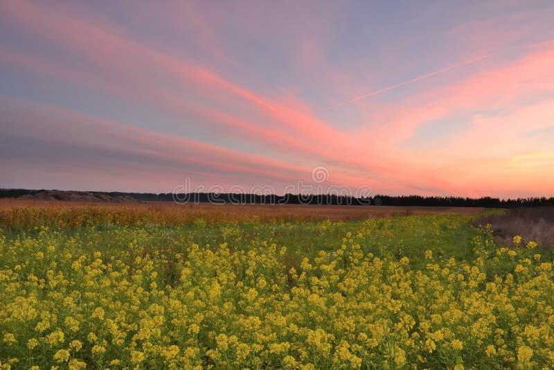 Заход солнца в поле осени стоковые фотографии rf