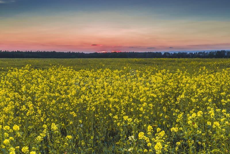 Заход солнца в поле осени стоковые изображения rf