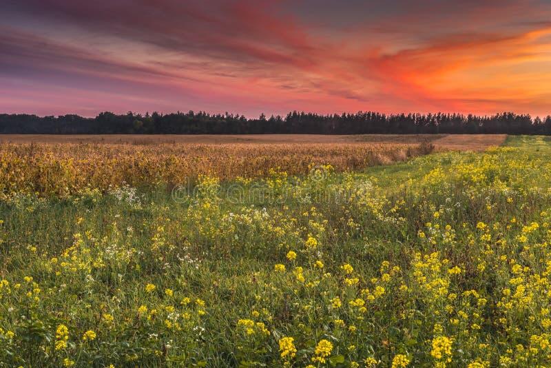 Заход солнца в поле осени стоковые изображения