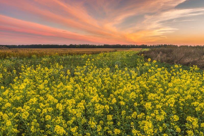 Заход солнца в поле осени стоковая фотография