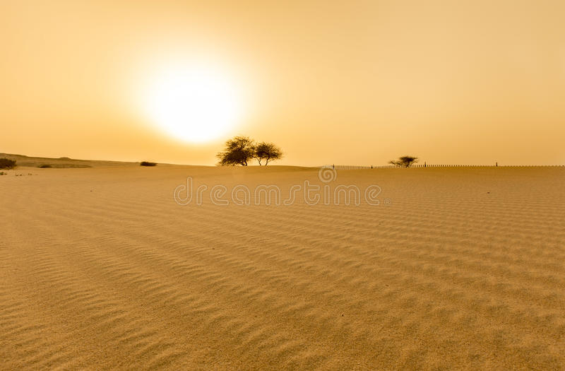 Заход солнца в пустыне стоковое фото rf