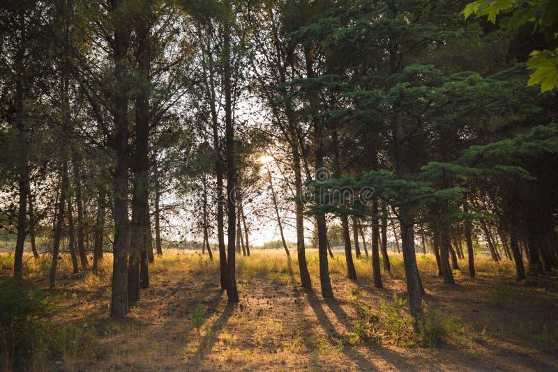 Заход солнца в пуще стоковые изображения rf