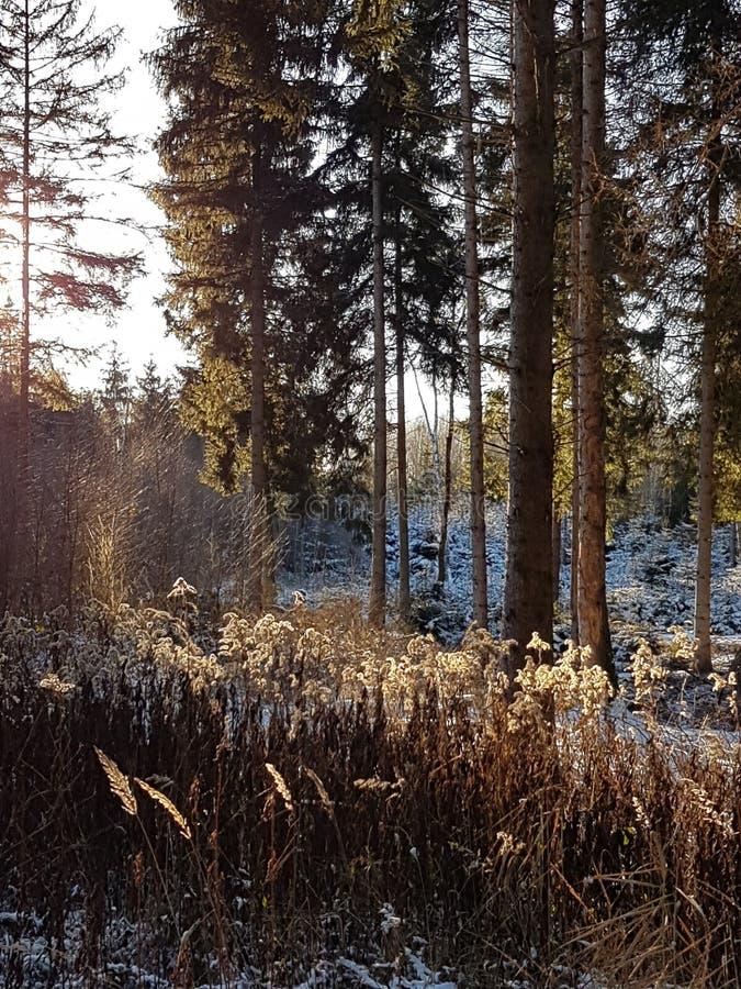Заход солнца в пуще стоковая фотография rf