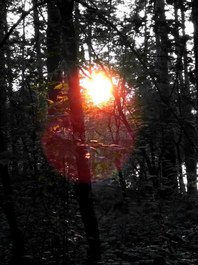 Заход солнца в темном лесе стоковые фотографии rf