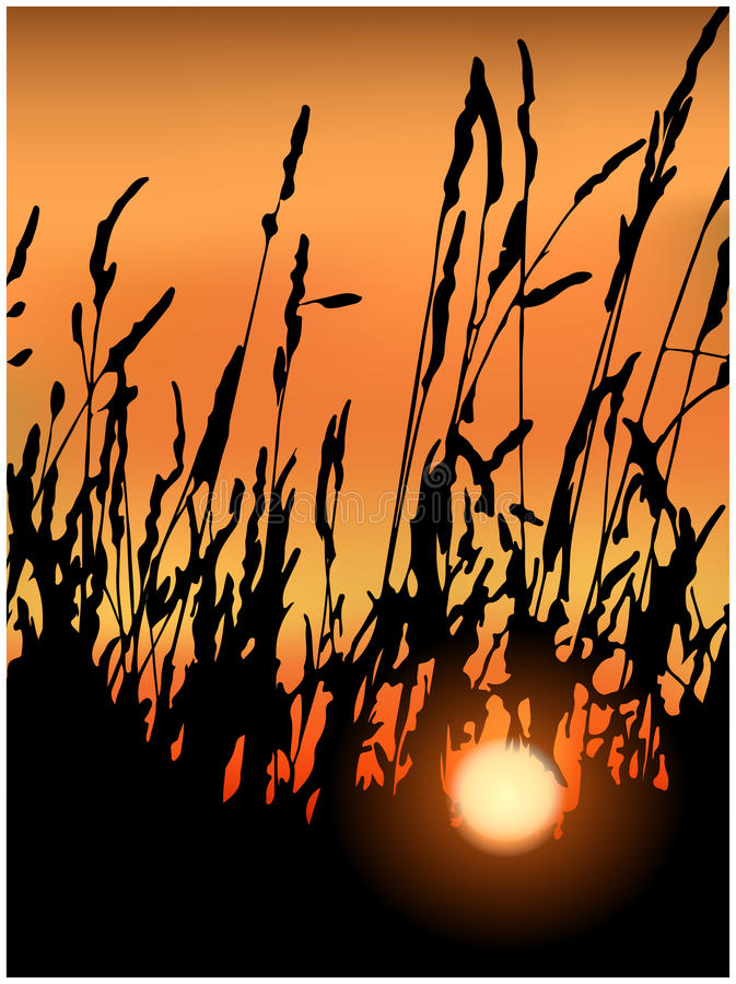 Заход солнца в травах иллюстрация штока