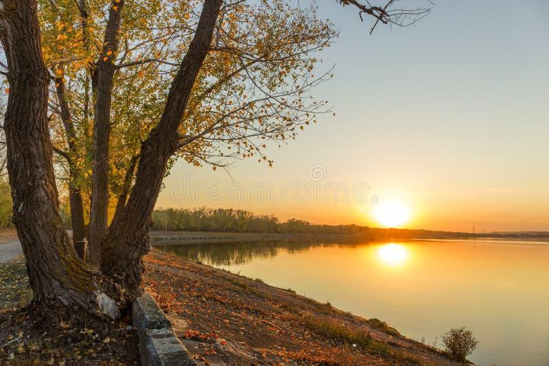 Заход солнца дерева реки осени стоковые изображения