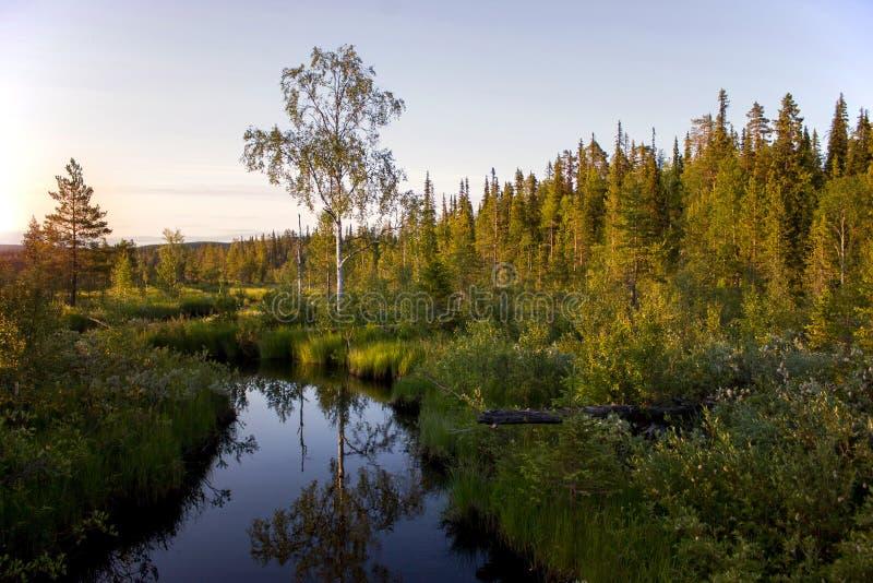 Заход солнца лета в карельском лесе России стоковая фотография