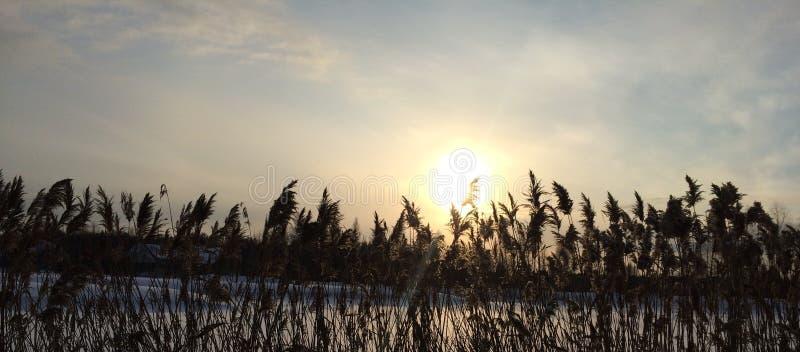 Заход солнца зимы на предпосылке сухой травы и голубого неба стоковые изображения