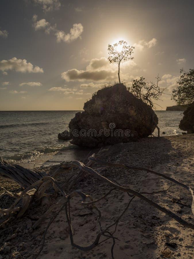 Download Заход солнца и дерево стоковое фото. изображение насчитывающей curacao - 41655650