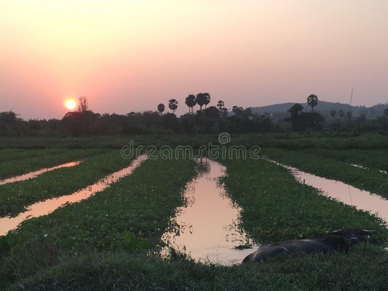 Заход солнца и природа Пхукета Таиланда стоковые изображения rf