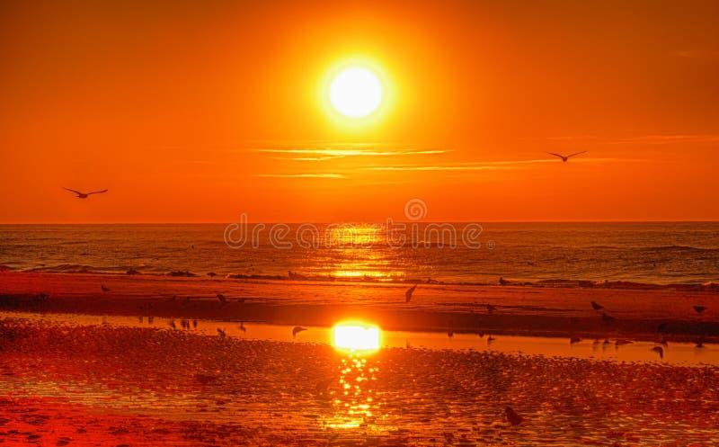 Заход солнца и птицы стоковое фото
