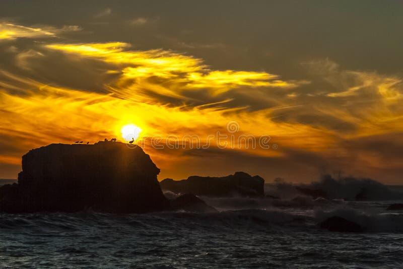 Заход солнца и птицы стоковые изображения rf
