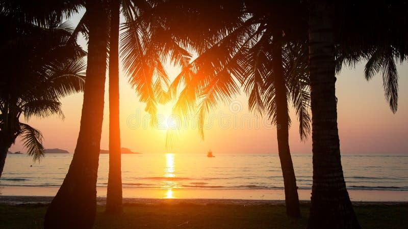 Заход солнца и силуэт пальм на море приставают к берегу Природа стоковая фотография