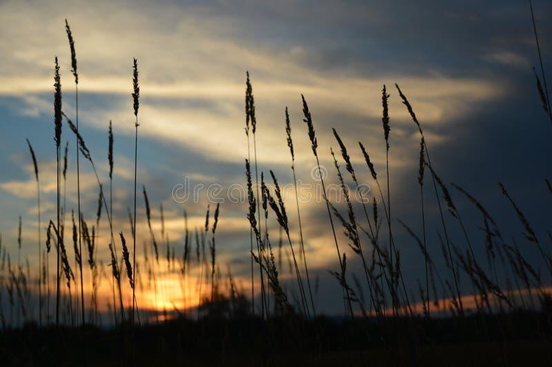 Заход солнца между строкой сена стоковое фото rf