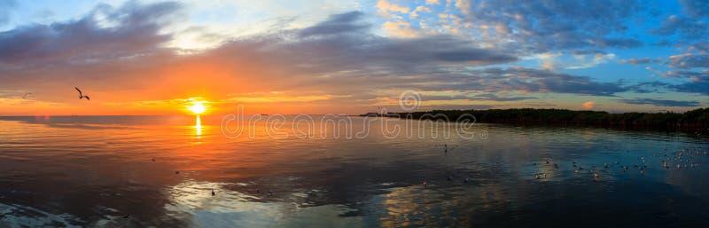 Заход солнца моря спокойной сцены панорамы пасмурный при чайки летая на заход солнца стоковое фото rf