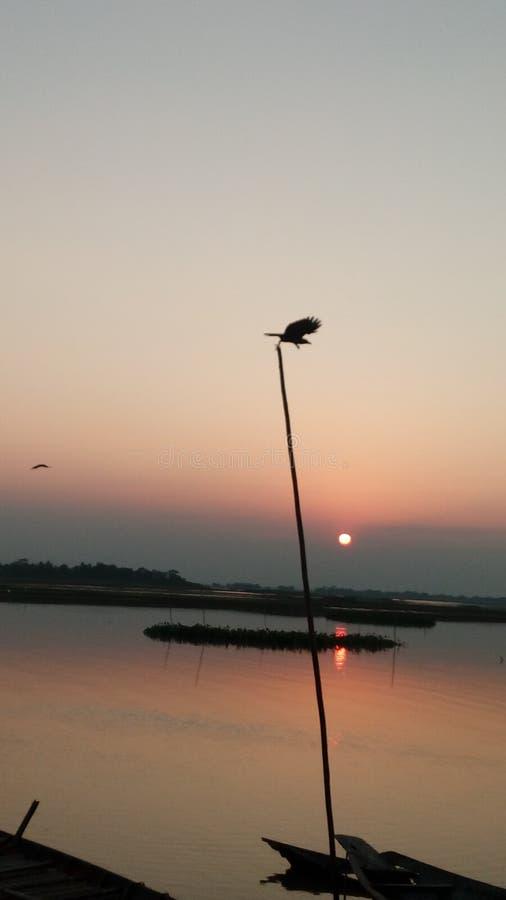Заход солнца мухы птицы стоковые фотографии rf