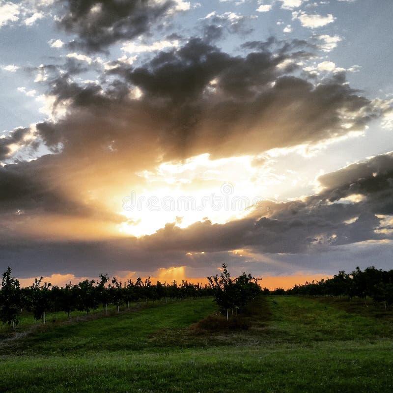 Заход солнца над апельсинами стоковое фото rf