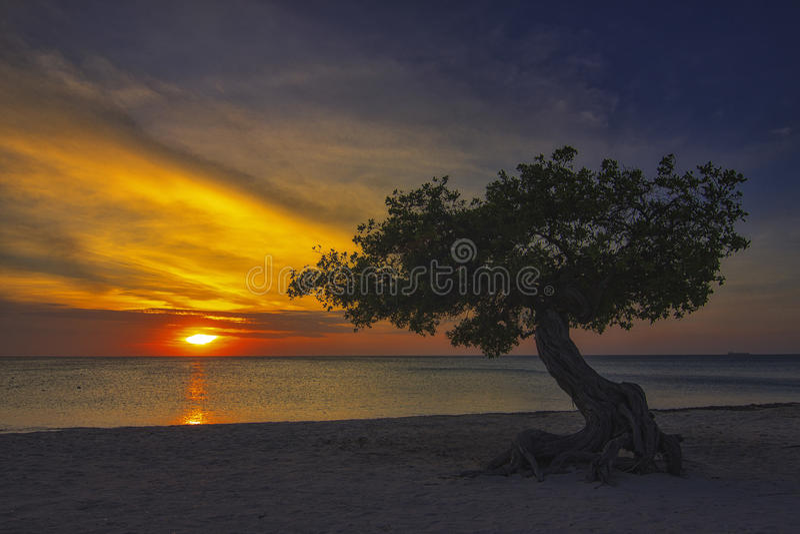 Заход солнца на Аруба с деревом Divi Divi стоковое изображение rf