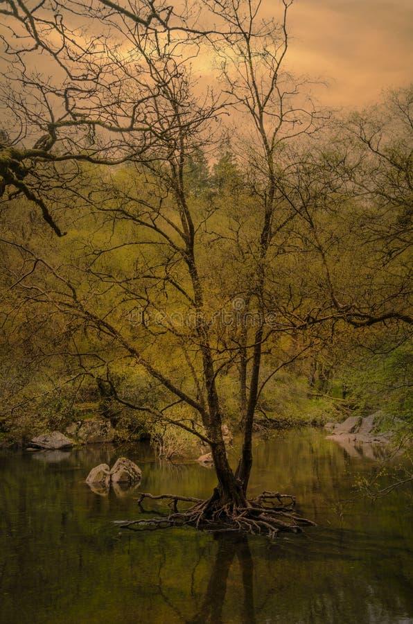 Заход солнца на волшебном бассейне стоковое фото rf