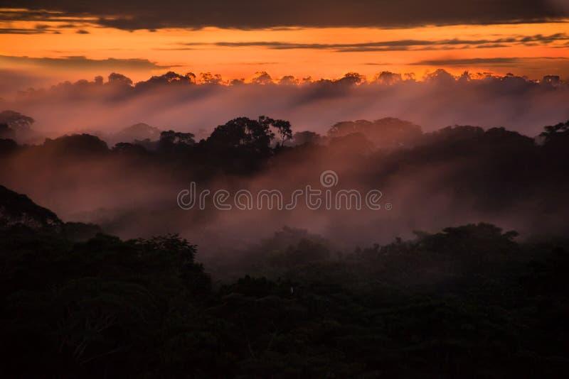 Заход солнца над деревьями таза Амазонки стоковые фото