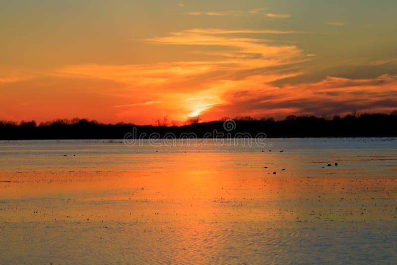 Заход солнца над затопленными полями риса используемыми для охотиться во время сезона утки стоковые фото