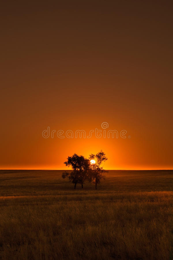 Заход солнца на зеленом луге с деревом стоковая фотография rf