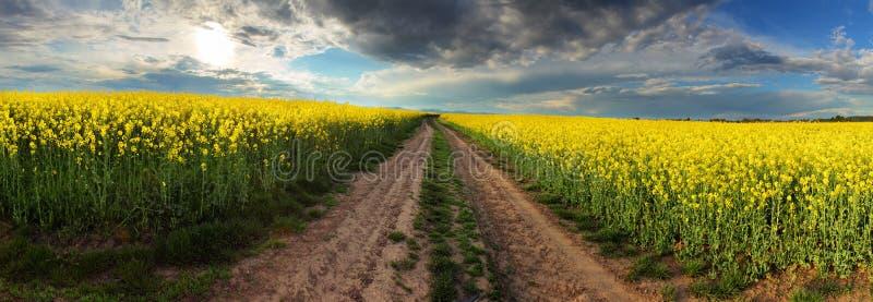 Заход солнца над канола полем с путем в Словакии - панорама стоковое изображение rf