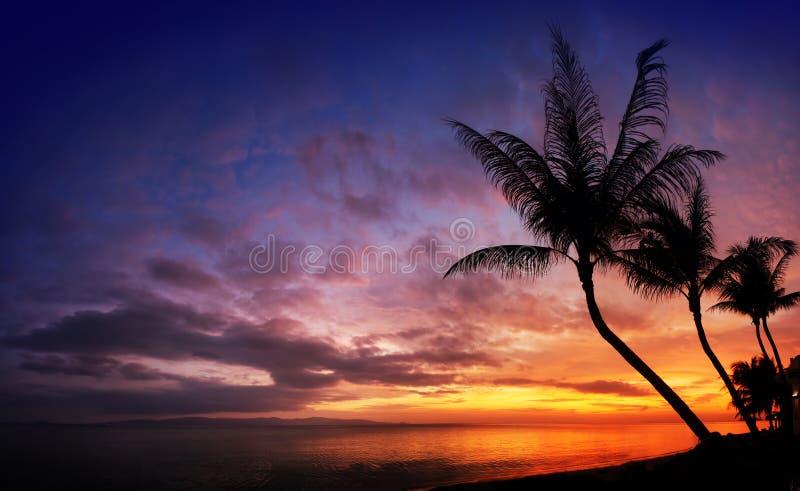 Заход солнца над морем с тропическими пальмами стоковое изображение
