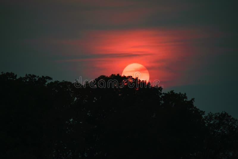 Заход солнца на озере в лете стоковые изображения rf