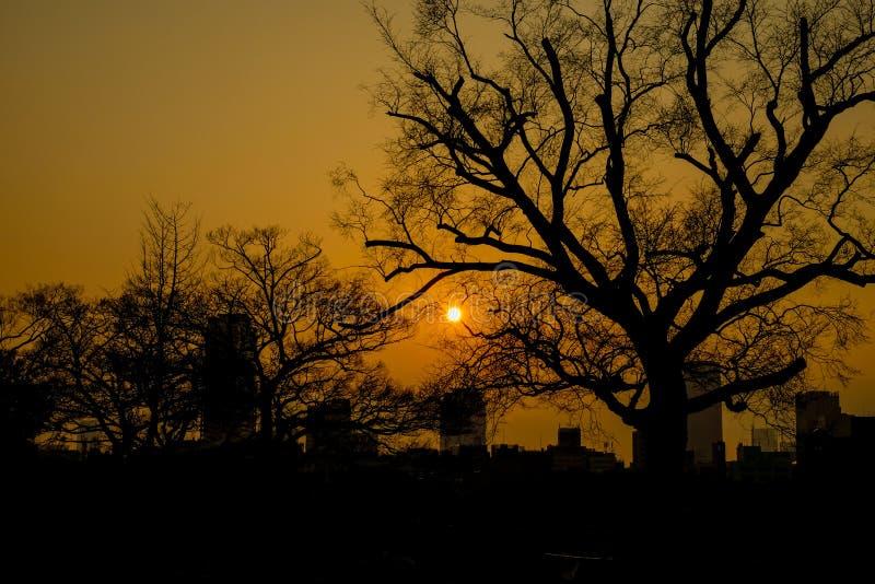 Заход солнца на Осака стоковое изображение