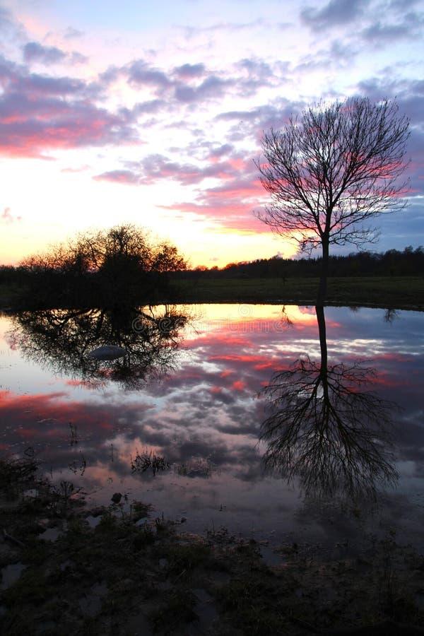 Заход солнца на пруде стоковые изображения