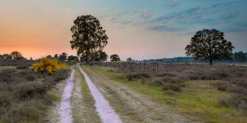 Заход солнца над пустошью на heuvelrug Utrechtse стоковая фотография rf