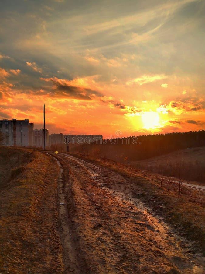 Заход солнца над пущей стоковые фотографии rf