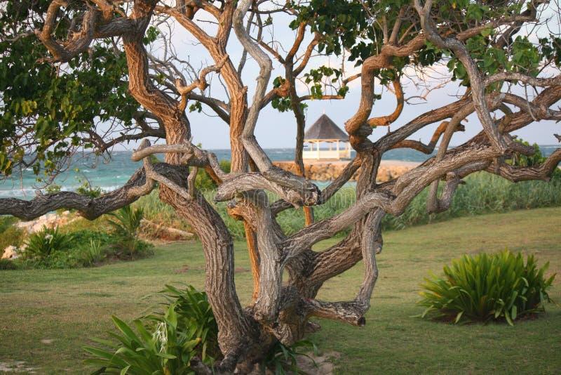 Заход солнца на скалистом дереве с газебо в расстоянии стоковая фотография rf