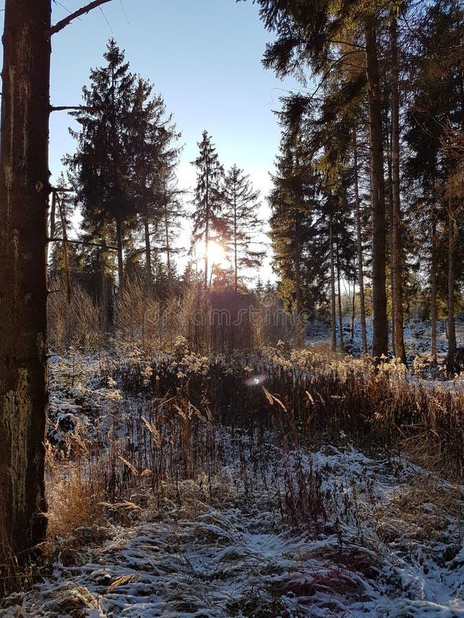 Заход солнца над снежными деревьями стоковые фотографии rf