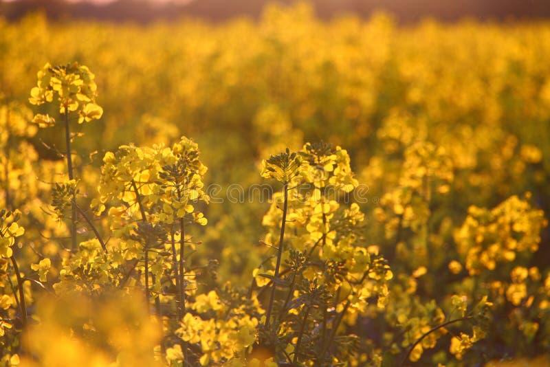 Заход солнца на луге цветков стоковое фото rf