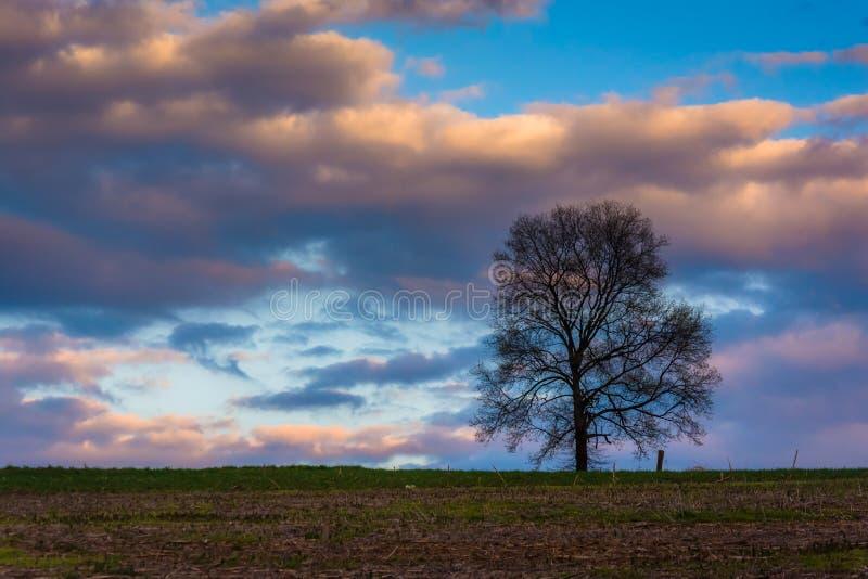 Заход солнца над уединённым деревом в поле фермы в сельском York County, pe стоковая фотография