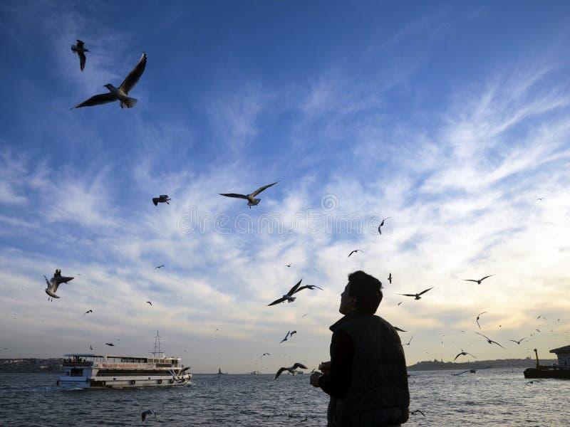 Заход солнца на чайках пляжа ед-давая человека стоковое изображение rf