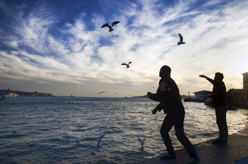 Заход солнца на чайках пляжа ед-давая человека стоковое фото