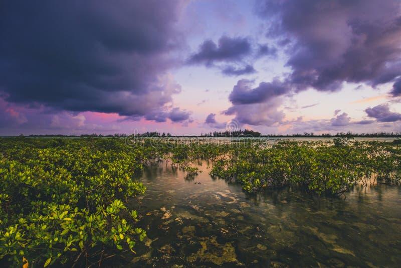 Заход солнца над mangorves стоковые изображения rf