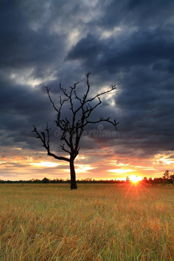 Заход солнца нивы стоковые изображения rf