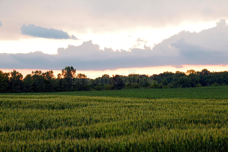 Заход солнца нивы стоковые фотографии rf