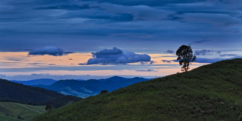 Заход солнца панорамы верхней части дерева BTops стоковые изображения